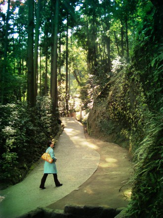 Walking through the forest in Kamakura